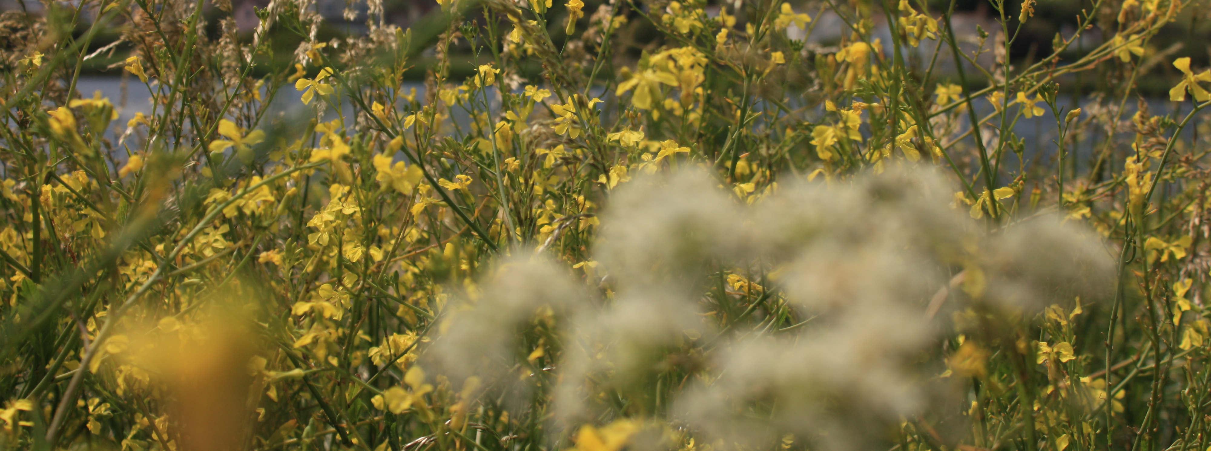Flowers By Slapton Ley Wilton Farm
